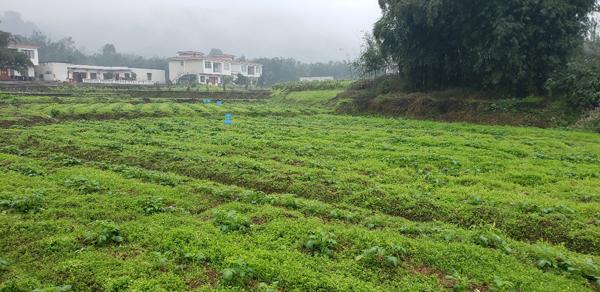 江安土壤修复